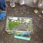 Atelier 5 - Nous aspergeons les escargots d'eau